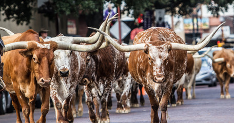 Photo sur cadre textile Texas Texas Longhorns at Fort Worth Stockyard Station