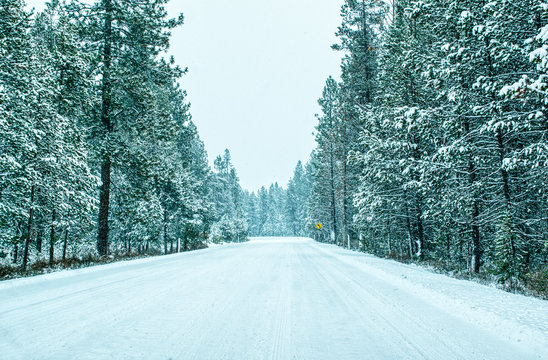 wide snowy forest road with frosted trees of winter