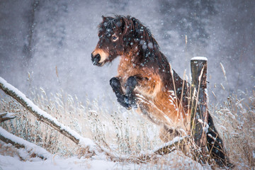 Portrait of a pony in winter forest. Wall mural
