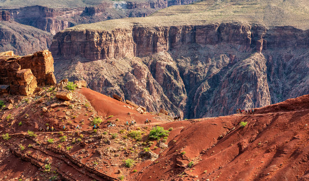 Mules on the epic South Kaibab Trail hike  at the Grand Canyon