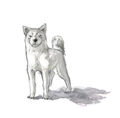 白い日本犬