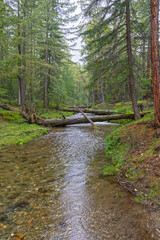 Garden Poster Forest Beautiful creek in the Siberian taiga.