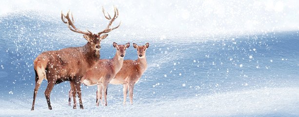 Wall Mural - Group of noble deer in the snow. Christmas artistic image. Winter wonderland. Banner format. Copy space.