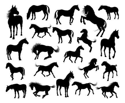A set of high quality very detailed horses in silhouette in various poses and positions