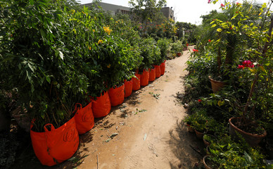 Bags of plants with weight and ordinal numbers written on them are seen before being transported for planting along the pilgrimage route between Iraqi Shi'ite Muslim holy city of Najaf and Karbala, at a farm on the outskirts of Karachi