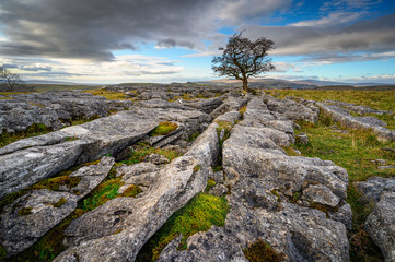 Lone Hawthorn Tree at Winskill Stones, which is a nature reserve above the village of Langcliffe in the Yorkshire Dales and home to a section of Limestone Pavement