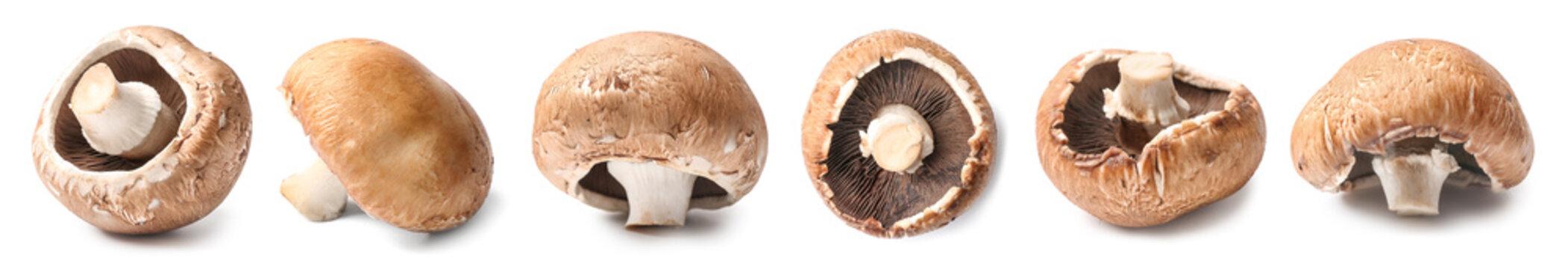 Fresh champignon mushroom on white background