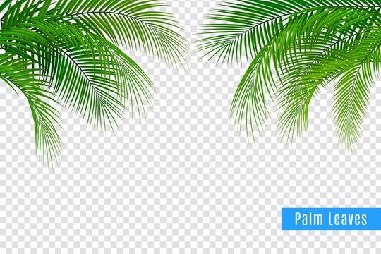 Realistic Tropical Leaves Frame