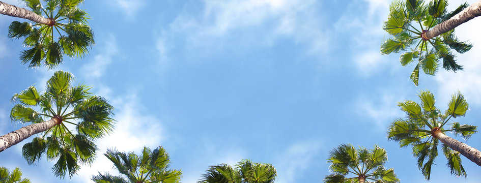 Palm trees shown from below with blue sky in the background.