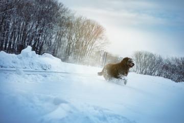 Happy dog in snow