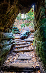 old steps at a forest