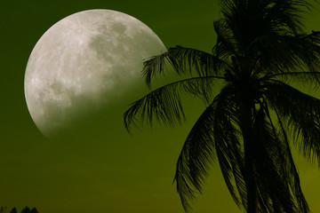 A beautiful picture of the moon looking through a coconut tree.