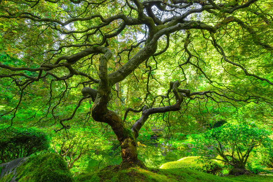 Lush green leaves and foliage at the Portland Japanese Gardens