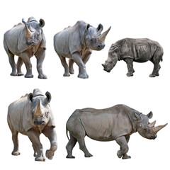 Foto op Aluminium Neushoorn Set of Rhinoceros Isolated on a White Background.