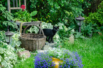 black kitten in garden
