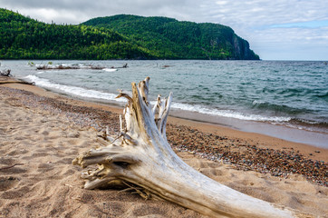 large driftwood on beach of Old Woman Bay