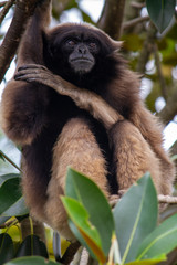 Tree monkey 2