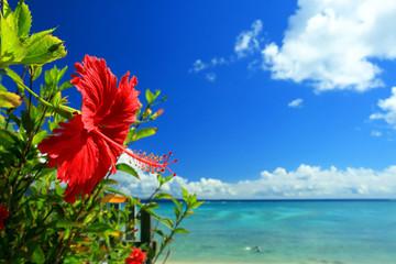 沖縄の青い海と赤いハイビスカス