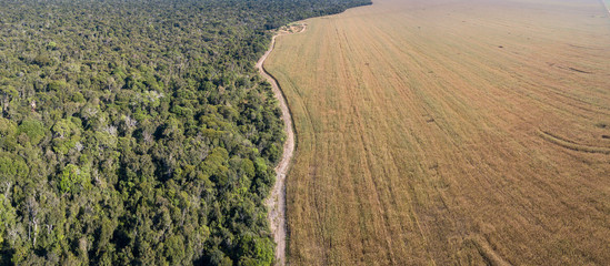 Photo sur Toile Brésil Panoramic drone aerial view of Xingu Indigenous Park territory and soybean farms in the Amazon rainforest, Mato Grosso, Brazil. Concept of deforestation, agriculture, global warming and environment.