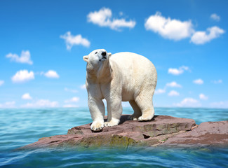 Photo sur Plexiglas Ours Blanc Polar bear stand on the rock in the middle of the sea. Change climate or global warming theme.