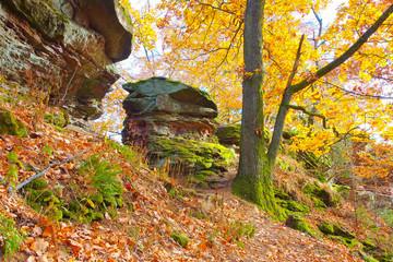 Pfälzer Wald im Herbst - in Palatinate Forest in autumn