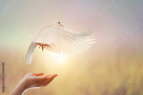 Foto em tela White Dove in Two Hand woman on vintage pastel background in international day of peace concept