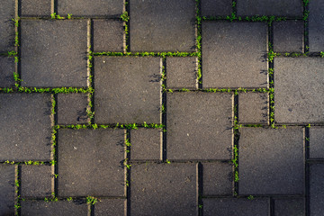 Paving stones overgrown with green grass Fototapete