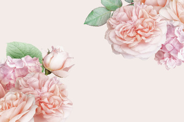 Zelfklevend Fotobehang Hydrangea Blush pink roses, tulip, hydrangea isolated on pastel background. Floral banner, header with copy space. Natural flowers wallpaper or greeting card.
