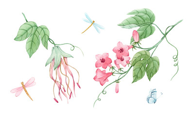 Watercolor floral set with tropical plants. Branch with gentle pink flowers and dragonflies. Stock illustration.