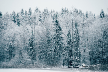 Trees strewn with snow in the winter forest.