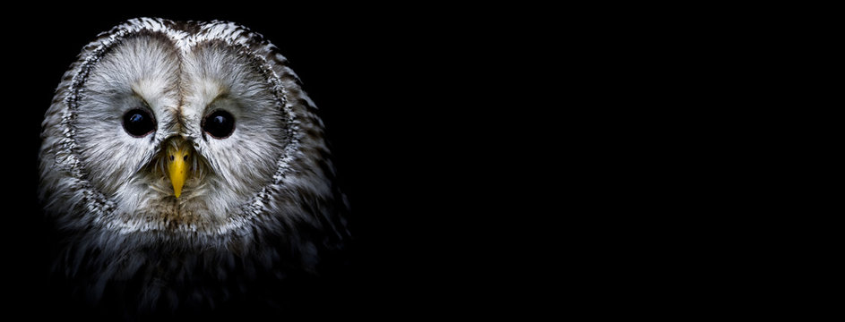 Owl with a black background