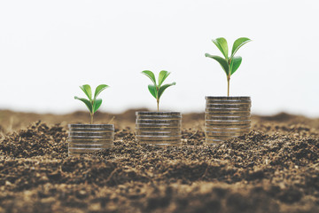 Plant growing from a pile of coins. Investment concept.