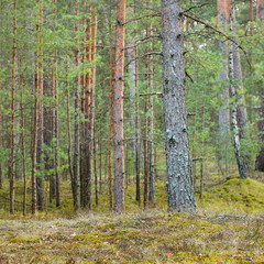 Wall Murals Northern forest landscape
