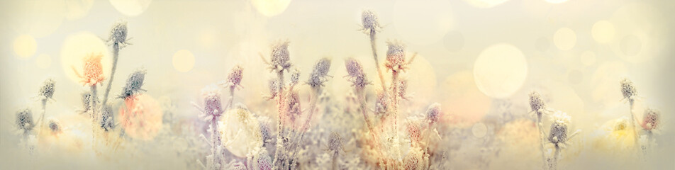 Selective focus on hoarfrost on thistle - burdock, morning fog and frost in the meadow