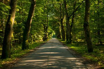 Printed kitchen splashbacks Road in forest Droga przez las drzewa