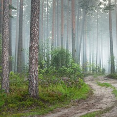 Keuken foto achterwand Bos in mist A road and foggy sunrise in the deciduous forest in Latvia.