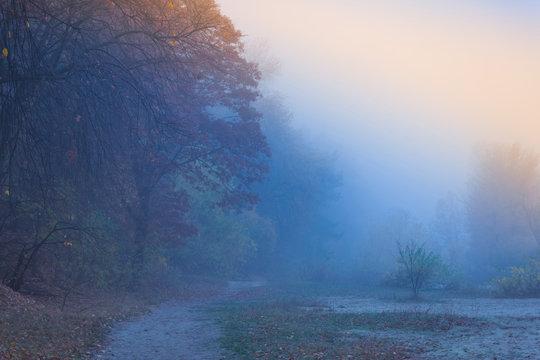 fog, nature, landscape, forest, sky, mist, tree, water, sunrise