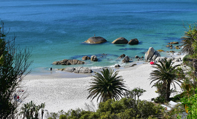 White sand beach surrounded by palm trees, man standing on rock in blue ocean, paradise at Clifton Beach, Cape Town, South Africa