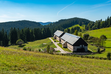 Cow in clear Countryside from Beskydy, the beautiful Mountains in north east Bohemia, Czech Republic