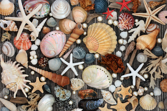 Large collection of seashells, driftwood, pebble &  seaweed on weathered wood background Natural treasures of the sea concept. Flat lay, top view.
