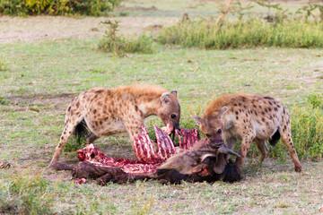 Wall Murals Hyena Hyenas eating wildebeest, Serengeti National Park, Africa