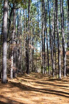 Trail in Smith Mountain Lake, Virginia