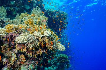 Spoed Foto op Canvas Koraalriffen Coral Reef at the Red Sea, Egypt