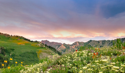 Door stickers Lavender Sunrise with wildflowers in the Wasatch Mountains, Alta, Utah, USA.