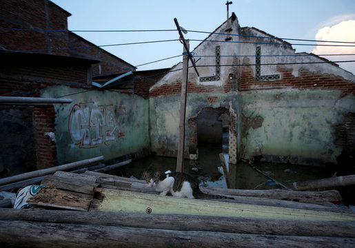 A cat looks on in front of a damaged house, which has been abandoned due to the rising sea level and land subsidence, at Tambakrejo village in Semarang