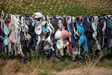 Quirky Cardrona Bra Fence, New Zealand