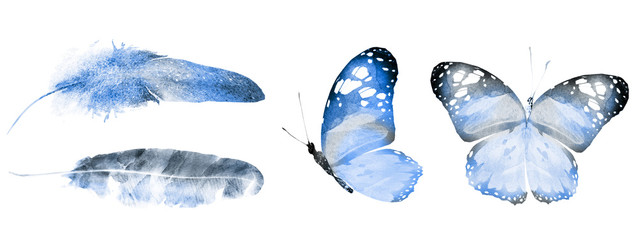 Two watercolor butterflies and feathers, isolated on white background