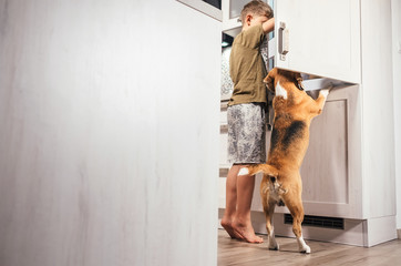 Little school Boy and beagle dog trying to find somthing eatable in kitchen fridge. Hunger and starving concept image. .