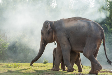 Asian elephant family walking together in the forest.