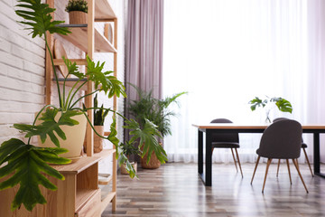 Stylish room interior with green plants. Home decoration